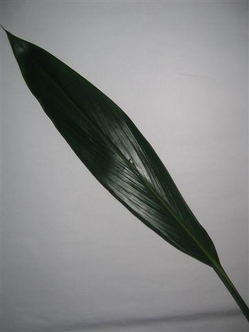 Darkgreen Leave