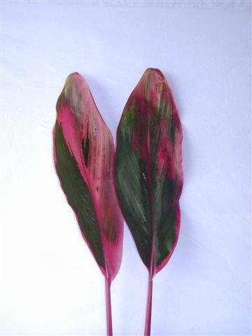 Tri Color Leaves