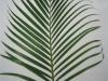 Yellow Palm