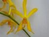 ar-js-yellow-single