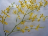 ar-js-yellow-stem