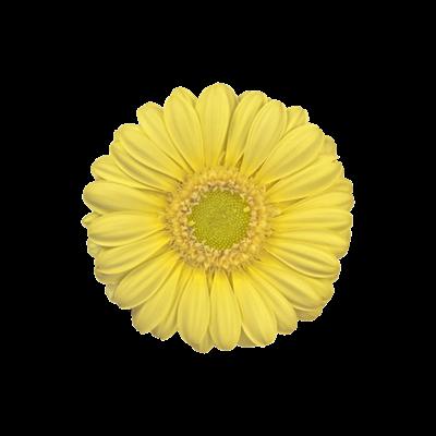 Lemon-Ice