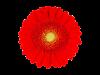 Red-Jewel-2