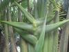 giant-green-en-arbol2
