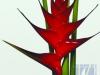 Caribea Red